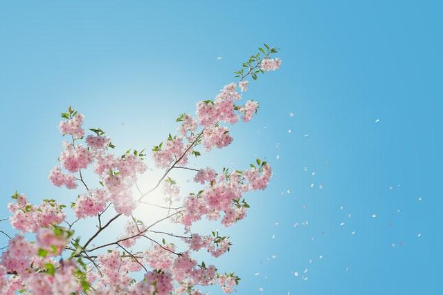 printemps énergie créative
